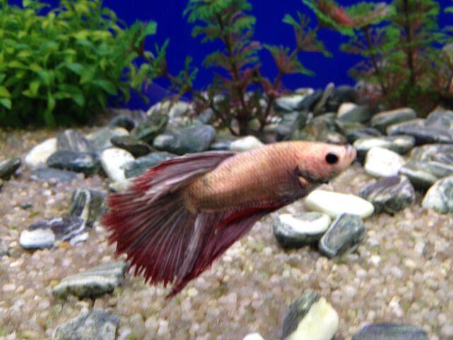 File:Fish 5.jpeg
