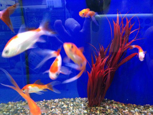 File:Fish 16.jpeg