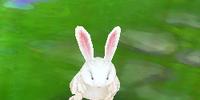 Slipper Bunny