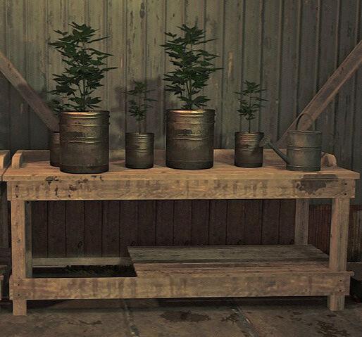 File:Cannabis Plants.jpg