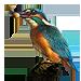 Item kingfisher 01
