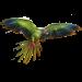Item red-tailedamazon 01