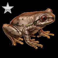 Huge item natalforestfrog silver 01