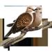 Item turtledoves 01
