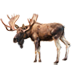 Item moose 01