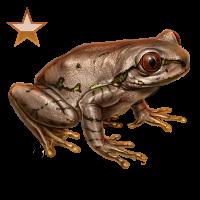 Huge item natalforestfrog bronze 01