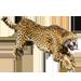 Item cheetah 01