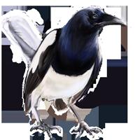 Huge item jailbird 01