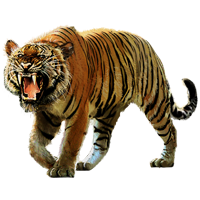Huge item bengaltiger 01
