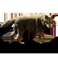 Huge item italianwolf 01