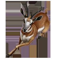 Huge item pronghornantelope 1