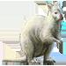 Item albinowallaby 01