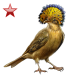 Item atlanticroyalflycatcher ruby 01