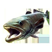 Huge item seabass 01