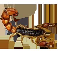 Huge item europeanscorpion 01