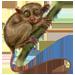 Item tarsiers 01