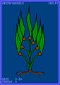 Green Vuukelp Card