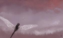 Cloud forest.jpg