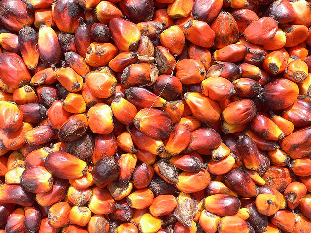 File:Palm nuts.jpg
