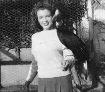 1 2c 1 Catalina Island ca1944 WrigleysBirdPark copy