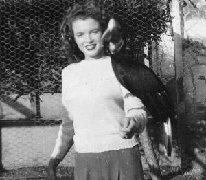 File:1 2c 1 Catalina Island ca1944 WrigleysBirdPark copy.jpg