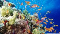 Coral reef southern red sea near safaga egypt-wallpaper-960x540