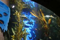 GA. Aquarium 124