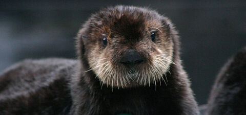 Exhibit-otter
