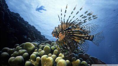 Lionfish pacific ocean-wallpaper-960x540