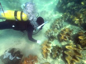 Ocean-reefs0-giant-clams-bolinao-philipines