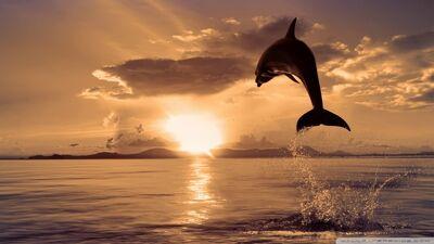 Jumping dolphin-wallpaper-960x540