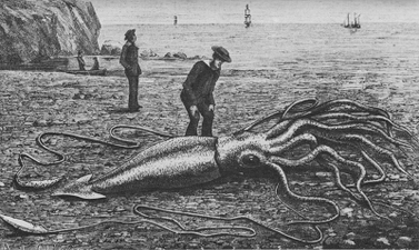 Giant squid catalina2