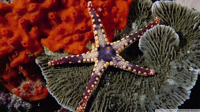 File:Starfish-wallpaper-960x540.jpg