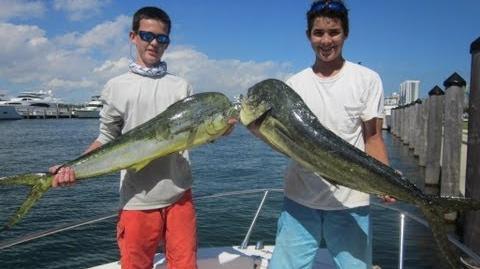 Mahi Mahi - Dolphin Fishing - Miami, Fl