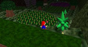 SwampyForest