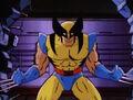Wolverine Introduction.jpg