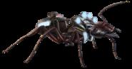 Carpenter Ant FH