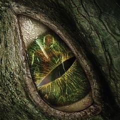 Lizard poster.