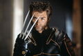 Hugh wolverine x-men.png