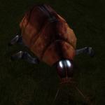 Creatures Space Beetle