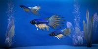 Illium Skald Fish