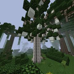 Unique jungle tree