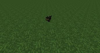 Mysterious Black Kitten