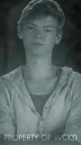 Archivo:Identity Newt.JPG