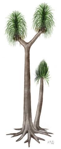 File:Sigillaria by unlobogris.jpg