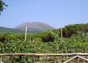 Vineyard volcano