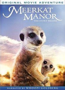 Meerkat Manor The Story Begins
