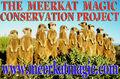 The Meerkat Magic Project.jpg