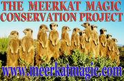 The Meerkat Magic Project