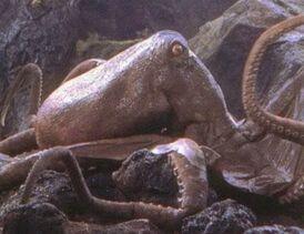 Oodako the giant octopus that debuted in King Kong versus Godzilla